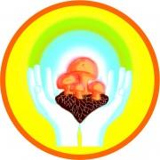 MykoTroph-Institut: Heilen mit Pilzen